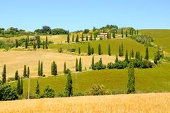Tree lined lanes of Tuscany Royalty Free Stock Photography