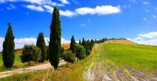 Tree lined lanes of Tuscany Royalty Free Stock Images