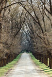 Tree Lined Laneway. A gravel laneway lined with large trees on both sides Royalty Free Stock Photo