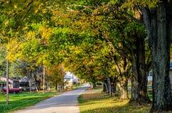 Tree-Lined Neighbourhood Stock Photography