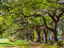 Tree Lined Park, Oak Trees in Savannah Park stock photo