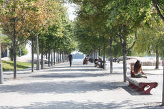 Tree Lined Park Walkway Toronto, Canada Stock Photos