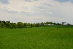 Tree lined pasture Stock Image
