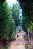 Tree lined path Royalty Free Stock Photos