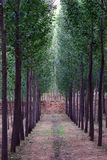 Tree lined path Stock Photo