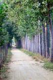 Tree lined path Royalty Free Stock Photo
