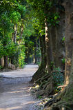 Tree-lined path. The tree-lined path in Okinawa, Japan.  It is called Fukugi Namiki Royalty Free Stock Photo