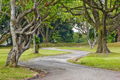 Tree lined path. Path lined with trees in park, Bidadari Cemetery, Singapore Stock Photography