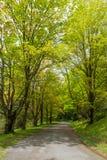 A tree-lined path around Bass Lake in North Carolina. royalty free stock photo