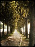 Tree lined path. On the banks of lake at Aix-les-Bains Stock Images