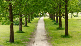 Tree lined path into the distance Stock Image
