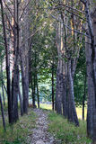 Tree lined path and fall leaves Royalty Free Stock Photography