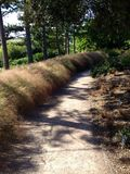 Tree lined path Stock Photos