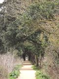 Tree lined path Royalty Free Stock Image