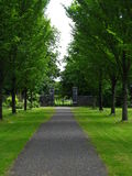 Tree lined path in lush park Stock Image