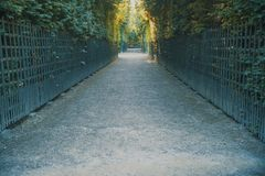Tree lined path in a park stock images
