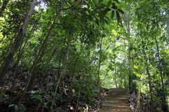 Tree lined path. Path lined with trees, Bukit Timah Nature Reserve, Singapore Royalty Free Stock Photo