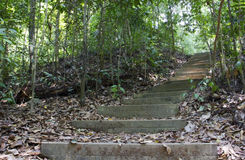 Tree lined path. Path lined with trees, Bukit Timah Nature Reserve, Singapore Royalty Free Stock Photography