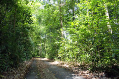Tree lined path. Path lined with trees, Bukit Timah Nature Reserve, Singapore Stock Photography