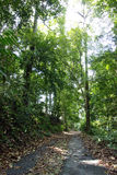 Tree lined path Royalty Free Stock Photos