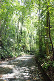 Tree lined path. Path lined with trees, Bukit Timah Nature Reserve, Singapore Stock Image