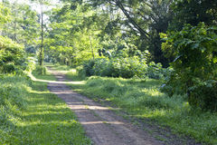 Tree lined path Stock Image