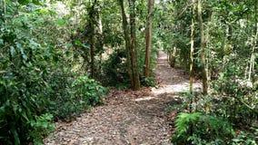 Tree lined path Stock Photo