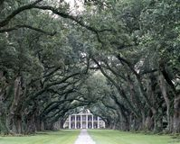Tree Lined Pathway. Photograph of a tree lined pathway, spanish oaks, with a mansion in the background Stock Image