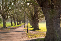 Tree lined Pathway. In Cambridge Stock Images