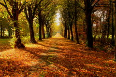 Tree lined pathway. Long tree lined pathway taken in the fall Royalty Free Stock Photography
