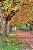Tree lined pathway in Autumn. Scenic view of tree lined pathway receding into distance, Autumn scene Stock Photos