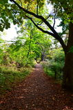 A tree lined pathway in the autumn woods Royalty Free Stock Images