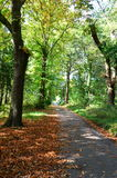 A tree lined pathway in the autumn woods Stock Images