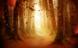 Pathway Through An Autumn Forest royalty free stock photos