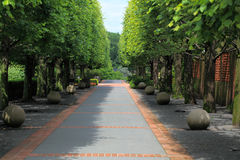 Tree Lined Pathway Stock Photos