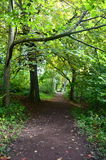 Tree lined pathway through the woods Royalty Free Stock Photo