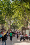 Tree Lined Pedestrian Mall in Barcelona Royalty Free Stock Photography