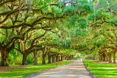 Tree Lined Plantation Entrance. Charleston, South Carolina, USA tree lined plantation entrance Royalty Free Stock Image
