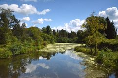 Pond. A tree lined pond with green algae and reflections of cumulus clouds on a summer day Royalty Free Stock Images