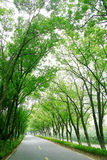 Tree lined road. Empty winding road enclosed by a canopy of trees Royalty Free Stock Image