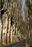 Tree lined road Stock Photos