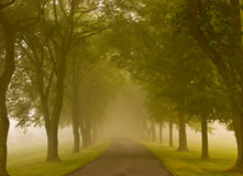 Tree lined road   Royalty Free Stock Images