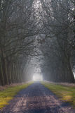 Tree Lined Road. Dark tree lined road with scary naked trees royalty free stock photos