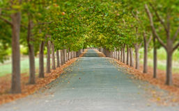 Tree lined road Stock Photography