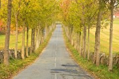 Tree lined road Royalty Free Stock Photography