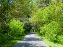 Tree-lined road Stock Images