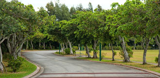 Tree lined road royalty free stock photo