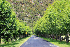Tree-lined Australian country road Stock Photo