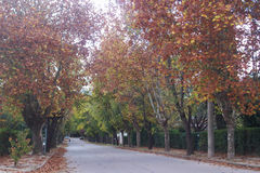 Tree lined road in autumn Stock Images