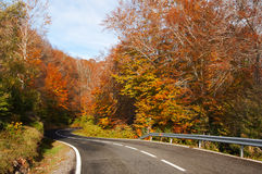 Tree lined road in autumn Stock Photo